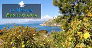 Macchia-mediterranea